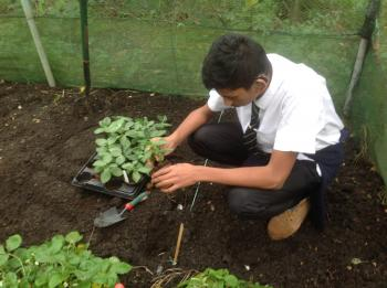 Horticulture training for oak lodge school share community - Practical tips for gardening in june ...
