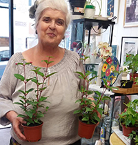 Share plants in Wandsworth Oasis shops