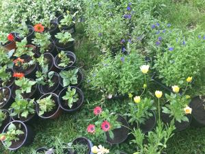 Plants for Sale in Wandsworth Oasis shops