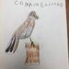 A common Buzzard by Georgia